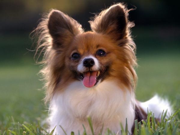 صور كلاب الجزء الاول 5Sobaki