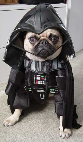 """Je suis ton """"Wouf"""" !! Vader-dog"""