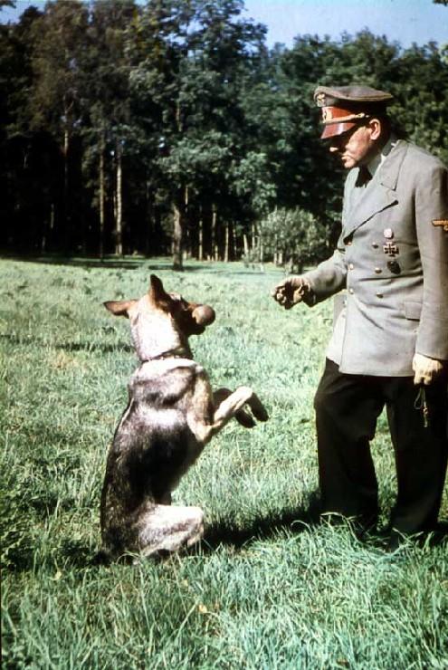 Godina 1945. Berlin ja sam Adolf Hitler - Page 4 Hitler_w_Blondi_500