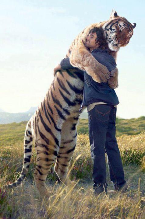 Au-delà de la douance... Calin-tigre-et-homme