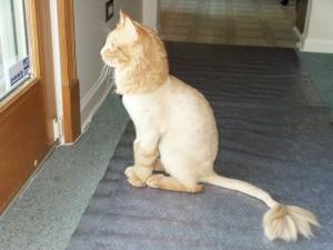 Побрить ли котенка?! (и прочие кошачьи радости) - Страница 2 PICT03331-300x225