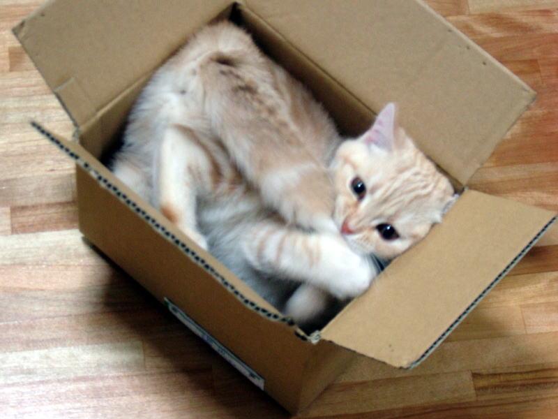 Gattilicious  =^.^= Cat%20in%20Box