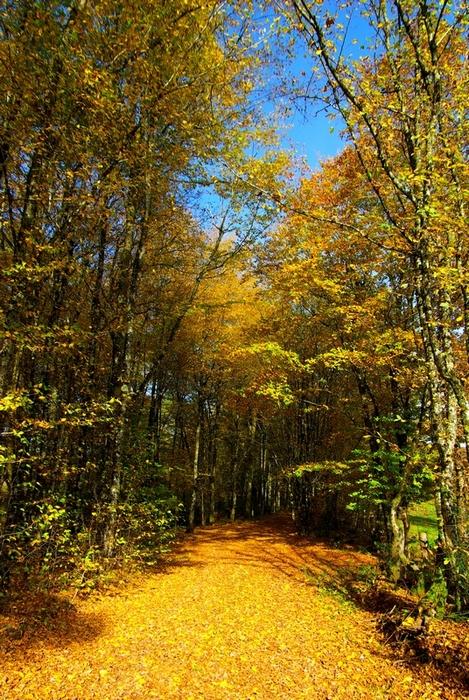 Concours Photo - Sujet concret d'Octobre - Des feuilles partout couchées sur les cailloux - Résultats en ligne 56f69046cfd3e8e8bb4f118dc5dab79b