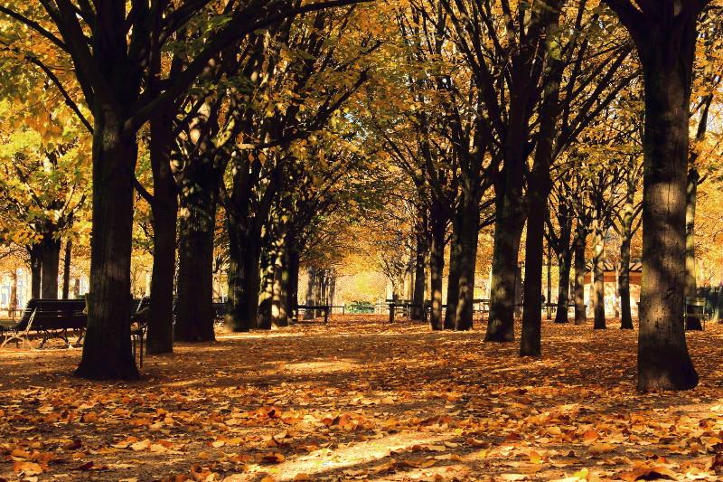 Concours Photo - Sujet concret d'Octobre - Des feuilles partout couchées sur les cailloux - Résultats en ligne 99493ee6ce0111a46e3b79d2e270ee43