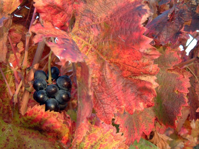 Concours Photo - Sujet concret d'Octobre - Des feuilles partout couchées sur les cailloux - Résultats en ligne F8853c60070cce4aa1c1dec96f669601