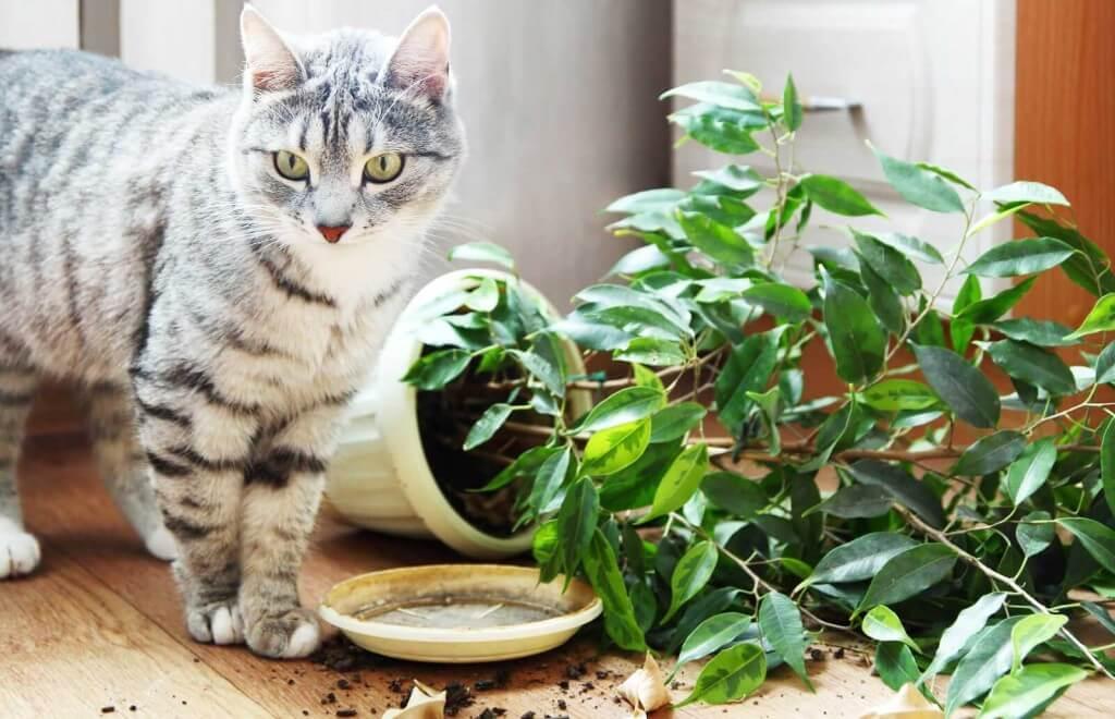 коты и цветы - Страница 2 Kot-i-tsvetok