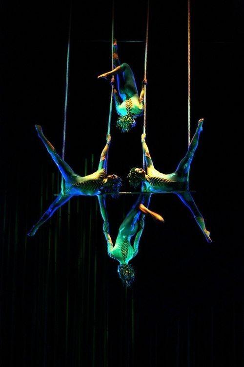 Le cirque ... 80508ab0