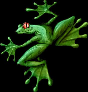Les grenouilles Cc0225d6