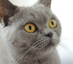 Why Are Cats Immune to Chemtrails? 5 Possible Answers From Science Chemtrailcat1