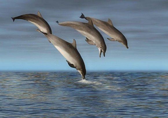 Messages des dauphins. 264bfbcd