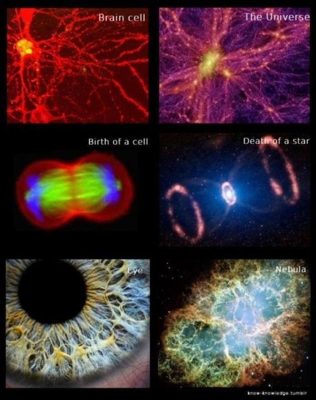 Ultimate reality - Page 2 Brain-cell-the-universe-birth-of-a-cell-death-of-a-star-eye-nebula