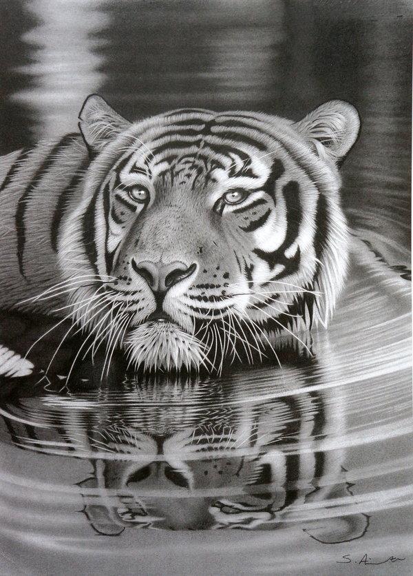 Crteži olovkom/grafika - Page 22 Pencil-drawing-of-tiger