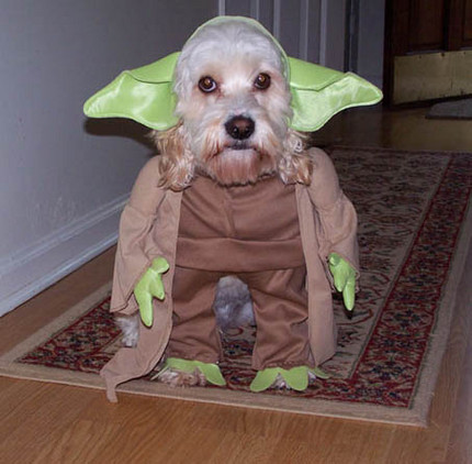 J'adore ce genre d'humour :P Funny-cosplay-dog41