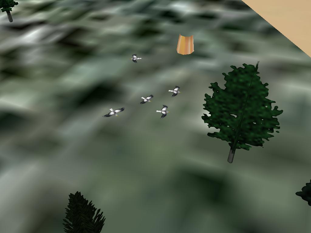 Il y a des oiseaux dans FG ? Mouettes