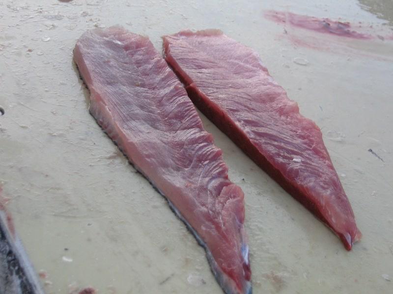 El Strip Bait - Filete de pescado para trolling por José Manuel López Pinto Jack9-751648