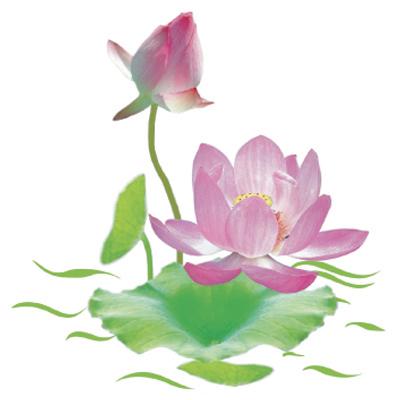 ĐOẢN TÁC - Hansy Hoa-sen