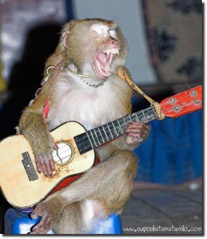 GLORIA, ESPAÑA 20100214043918-funeral-do-glogueiro-macaco-violao-musica-absurdo-rock-cantando-sentado-gritando-grito