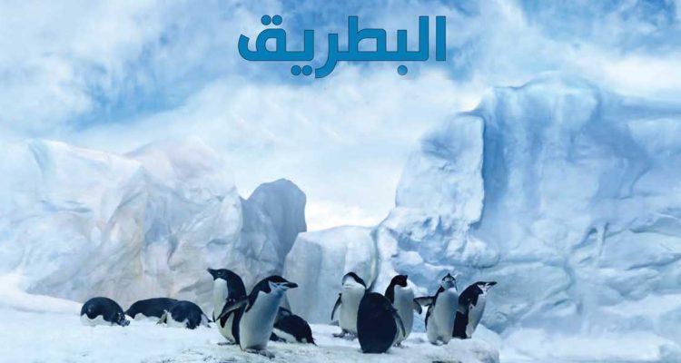 معلومات عن طائر البطريق وأين يجعل عشه 26-2-750x400