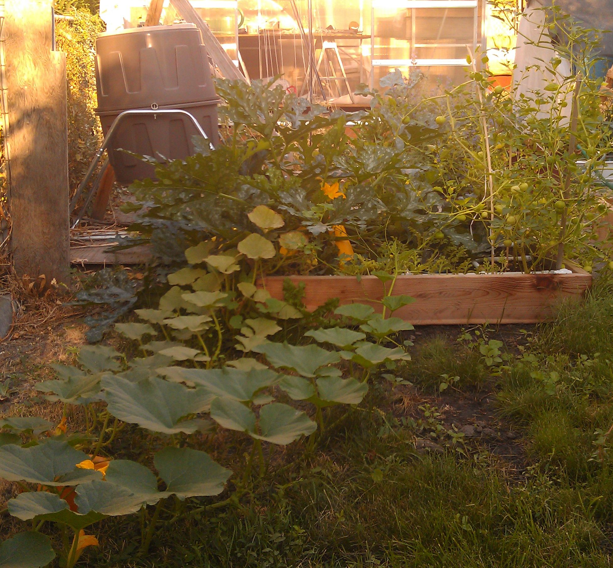 Mid Summer checking in! Aug-20-2012-2