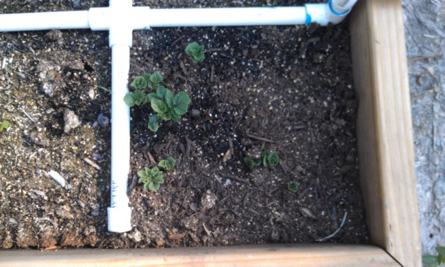 Mid Summer checking in! Aug-2012-I7