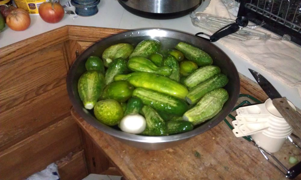 Pickles My first batch! Pickles07-06-13