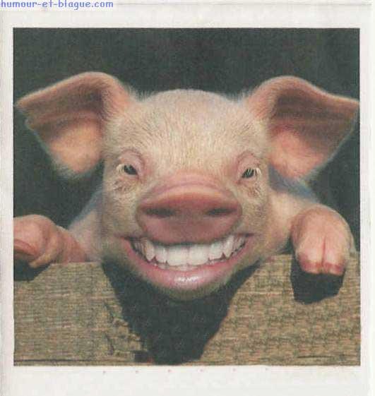 pour éviter de flooder les autres topics - Page 4 Cochon-rire