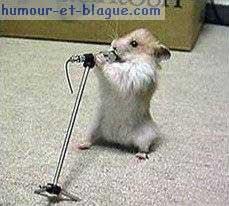 Postez ici des photos et Vidéos marrantes ! excellent ! - Page 2 Rat