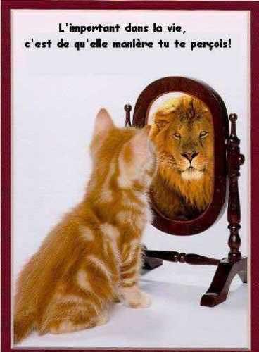 le rêveur Chat-en-lion