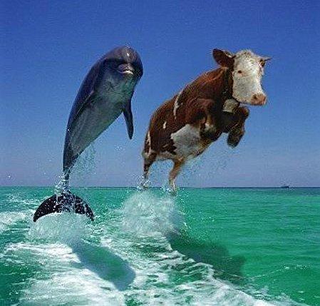 Rhaaaaa ...vive ton énergie - Page 14 Photos_humour_vaches_chevaux%20(9)