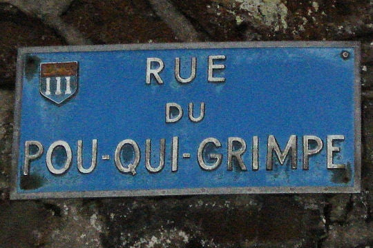 Images insolites - Page 2 1462291-rue-du-pou-qui-grimpe