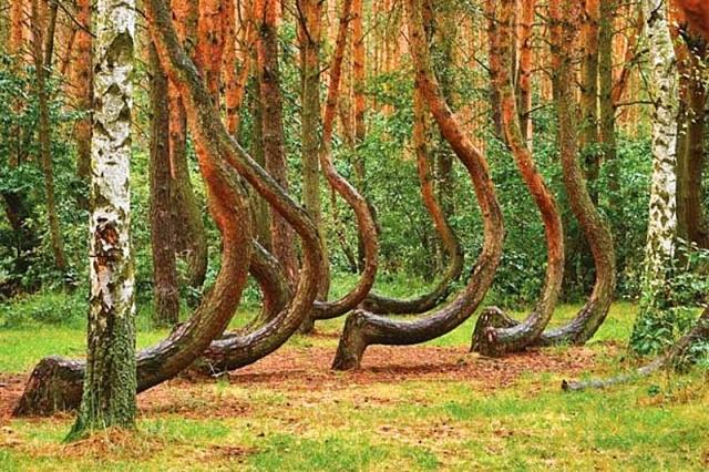 Самые необычные, удевительные явления природы - Страница 2 0_6973e_72c39763_XL