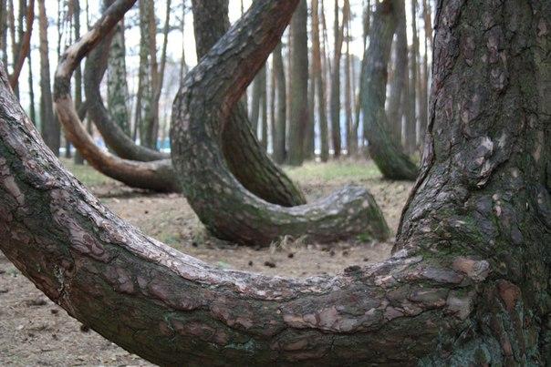 Самые необычные, удевительные явления природы - Страница 2 YmwcJ4LA2Ko