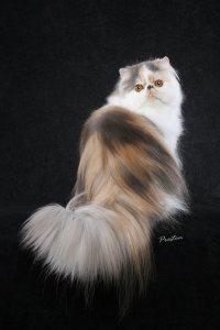 صور قطط جميلة Img81