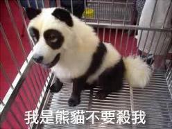 CAT-tastrophes! Anon1210483428-ChineseKillsDogAndCatButChineseDon668145_md