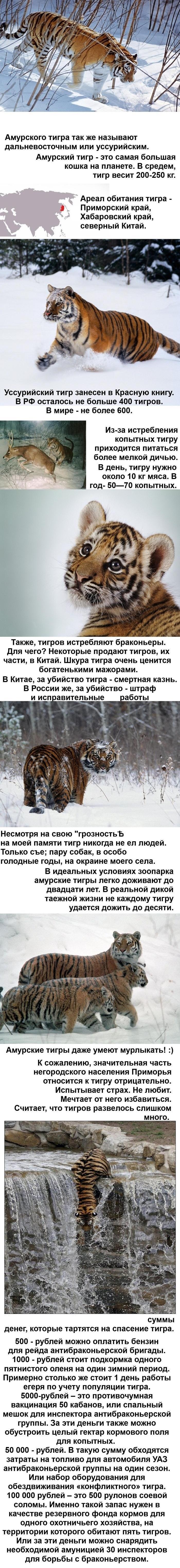 Это познавательно и интересно! Tigr-amurskiy