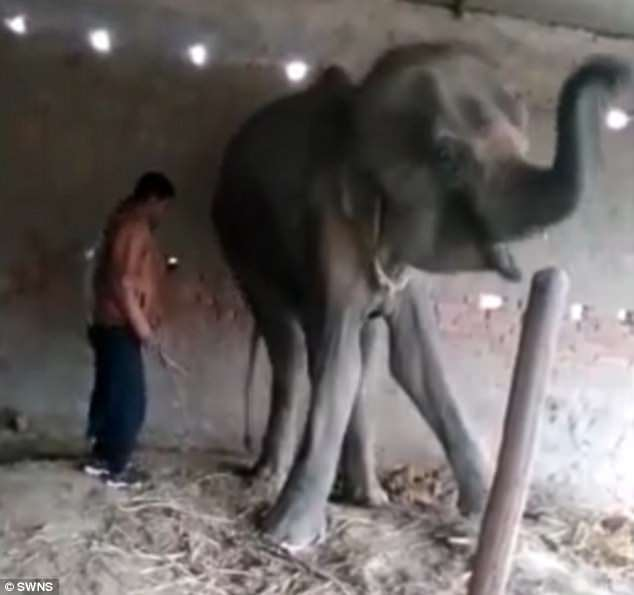 WARNING: GRAPHIC CONTENT - The last hours of a gentle giant tortured to death   4AB922CB00000578-5565075-image-m-73_1522511116818