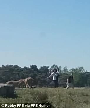 www.dailymail.co.uk Family-chased-by cheetahs after getting out of car in safari park 4C15359900000578-5717019-image-m-11_1526022415010
