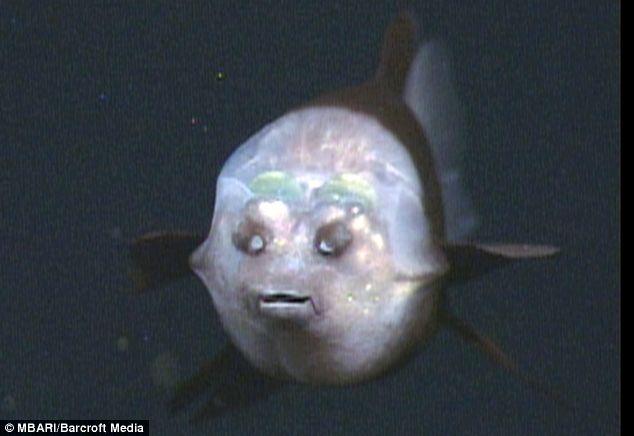 اخر اكتشافات عالم البحار  Article-0-03A96D95000005DC-712_634x436