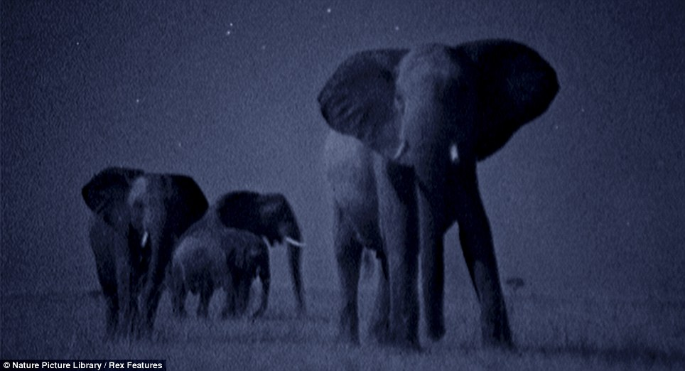 African savannah at night (Martin Dohrn) Article-1328484-0BFB29D7000005DC-601_964x522