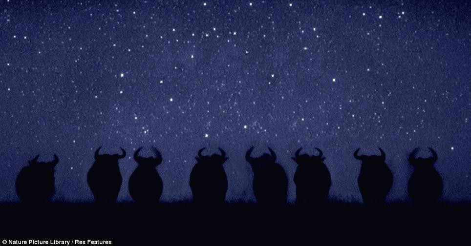 African savannah at night (Martin Dohrn) Article-1328484-0BFB29F3000005DC-566_964x504