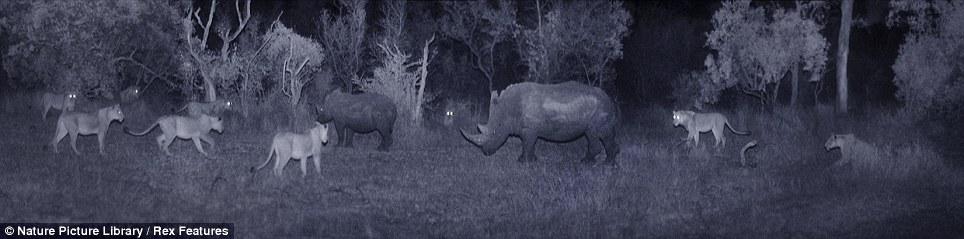 African savannah at night (Martin Dohrn) Article-1328484-0BFB2C80000005DC-576_964x239