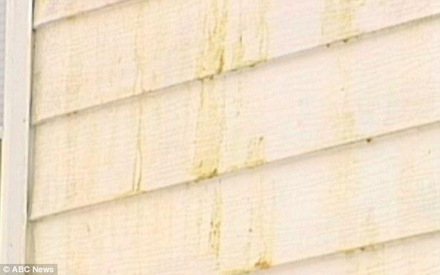 Gosma amarela-esverdeada misteriosa cai do céu em cidade do estado de Nova Iorque Article-1349151-0CD88993000005DC-819_634x397