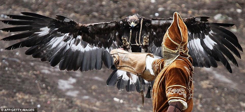 Comparação do tamanho de águias  com relação ao homem. Article-0-0E08B38700000578-222_964x443