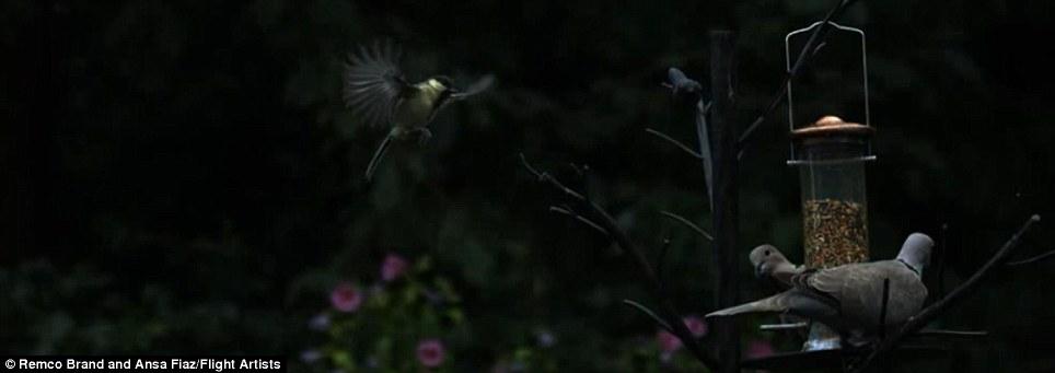 Are all sparrows nice  بالفيديو  كل العصافير لطيفة Article-0-0F7661FB00000578-834_964x341