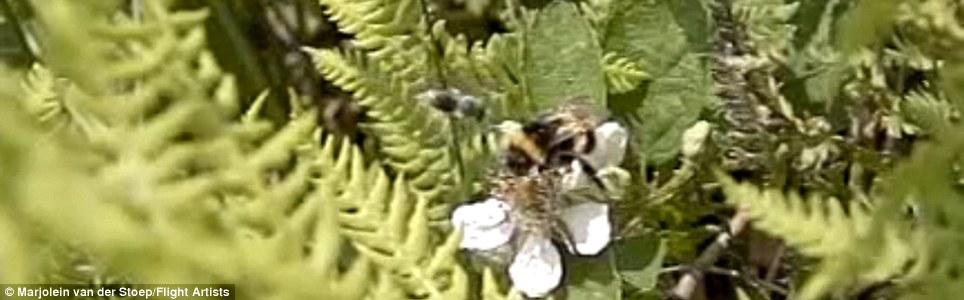 Are all sparrows nice  بالفيديو  كل العصافير لطيفة Article-0-0F7664EF00000578-156_964x300