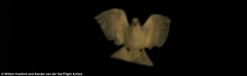 Are all sparrows nice  بالفيديو  كل العصافير لطيفة Article-0-0F76681300000578-545_964x300