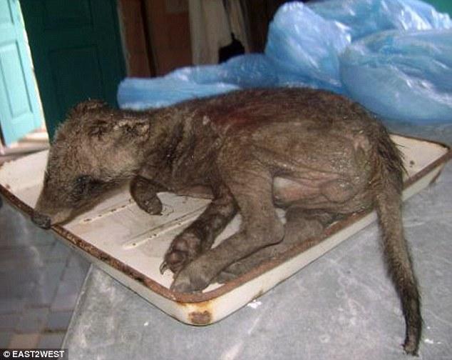 Ukraine : un animal mystérieux terrorise le pays Article-2192561-14AA522D000005DC-287_634x504