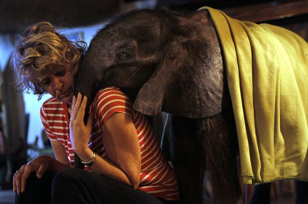 Orphaned baby elephant on road to recovery after finding new home with humans and two pet dogs  Article-2218330-1583D28F000005DC-363_634x419