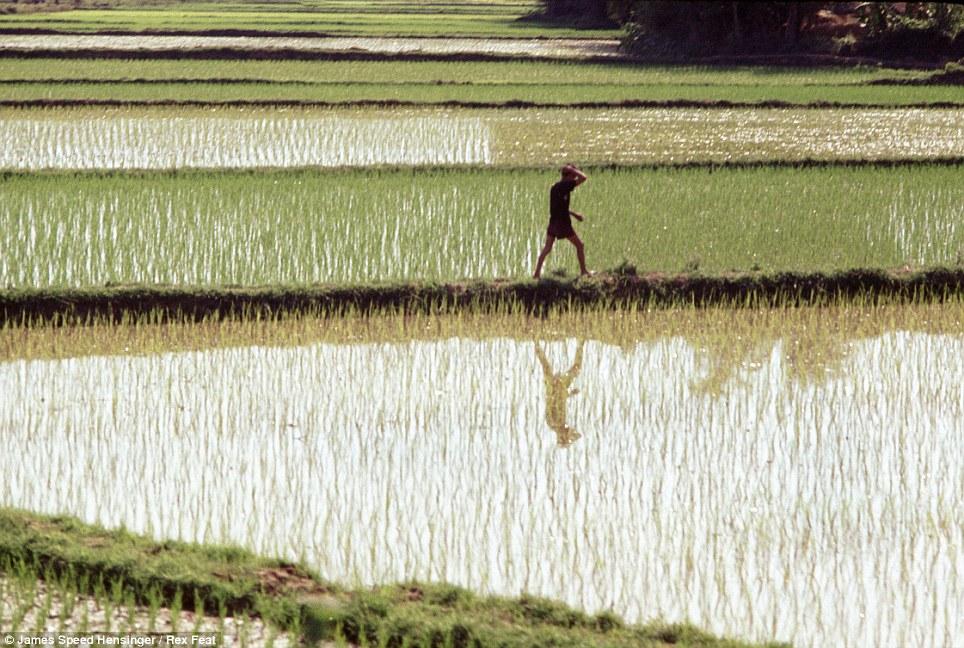 guerre du vietnam Article-2345454-1A6A5574000005DC-882_964x648