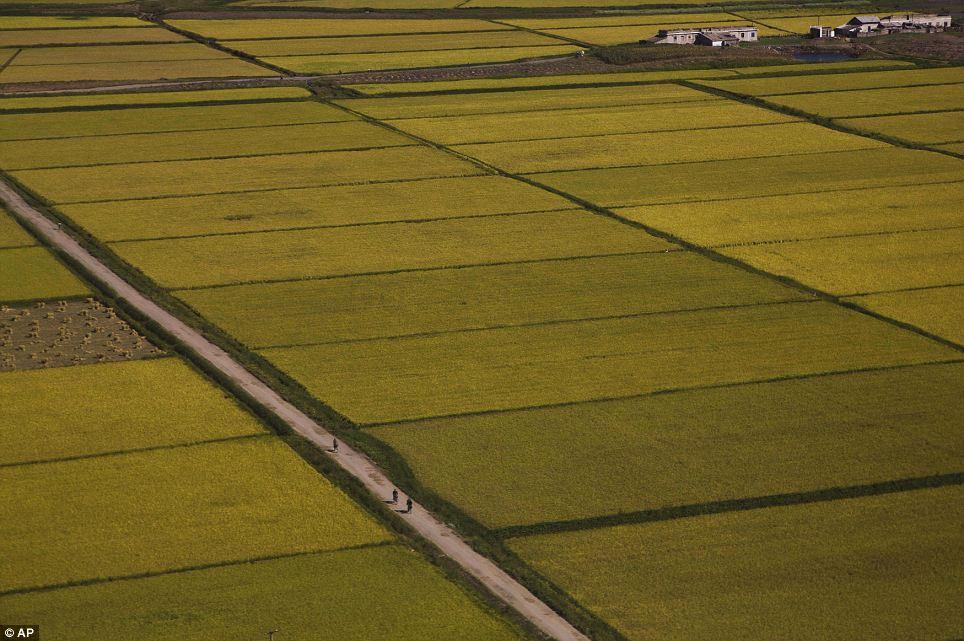 الحياة في كوريا الشماليه ..........متجدد  Article-2424516-1BDA97C1000005DC-397_964x641